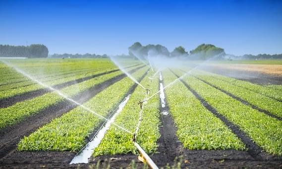 irrigazione treemme tempesta Roma